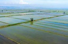 Αποφάσεις ένταξης σε δράσεις εναλλακτικής καταπολέμησης ζιζανίων