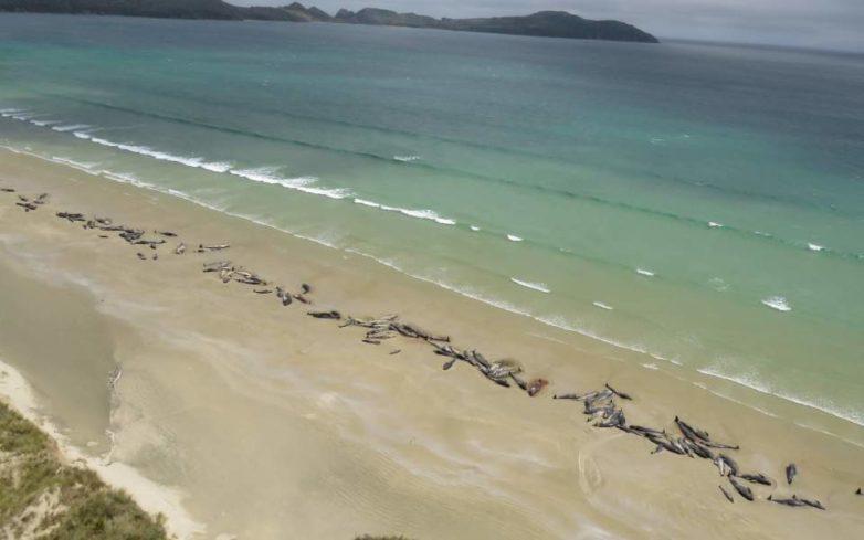 Νέος μαζικός θάνατος μαυροδέλφινων στη Νέα Ζηλανδία