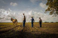 Ζητούν άμεση στήριξη αγροτών, επιχειρήσεων και εργαζομένων στον αγροδιατροφικό τομέα