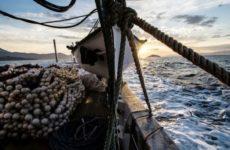 Σχέδια έκτακτης ανάγκης της ΕΕ για την αλιεία, σε περίπτωση Brexit χωρίς συμφωνία