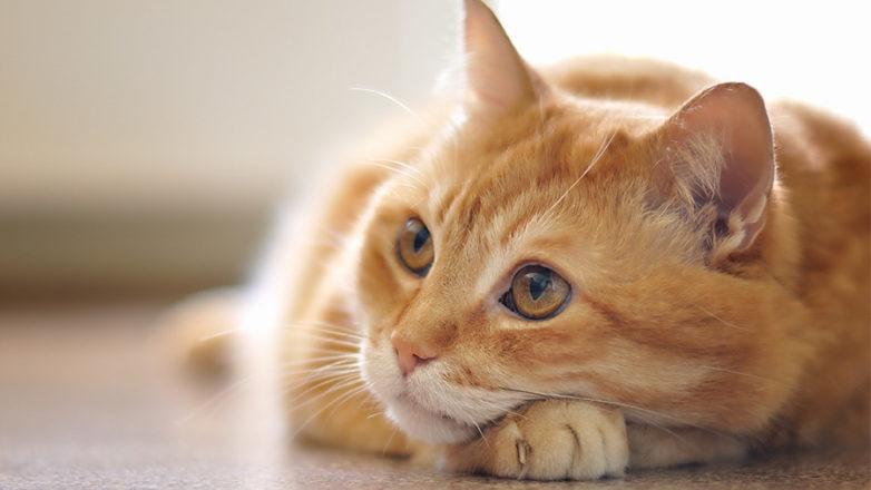 Στα έδρανα του Τριμελούς Πλημελλειοδικείου Βόλου βρέθηκε ένας γάτος…