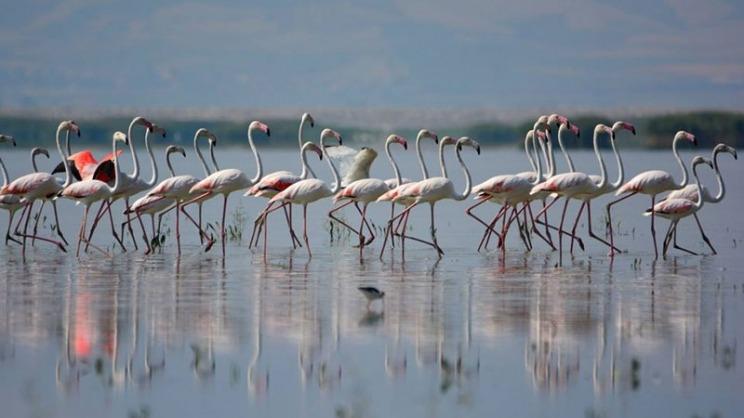 Η Ε.Ε. για τη λίμνη Κάρλα: « ένα έργο ωδή, στην Περιφέρεια και τους κατοίκους της»