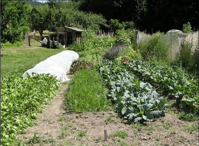 Ανάσχεση απώλειας της βιοποικιλότητας και οικοδόμηση ενός υγιούς και βιώσιμου συστήματος τροφίμων