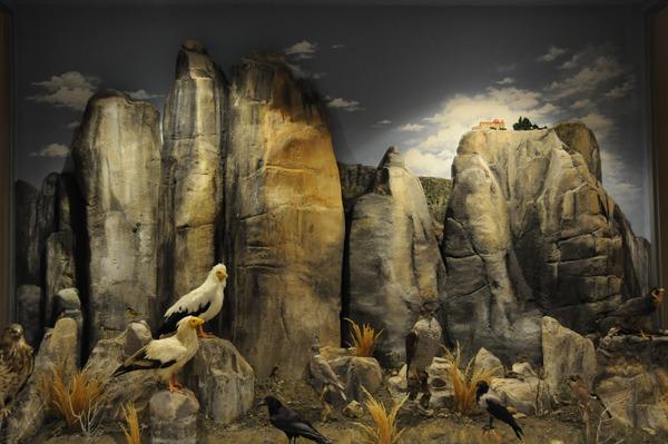 Τριπλή βράβευση του μουσείου φυσικής ιστορίας Μετεώρων και μουσείου μανιταριών