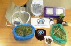 Σύλληψη 40χρονου για καλλιέργεια κάνναβης