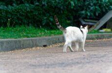 Ευάλωτες στον κορωνοϊό οι γάτες – Χαμηλότερη η πιθανότητα μετάδοσης της νόσου μεταξύ σκύλων