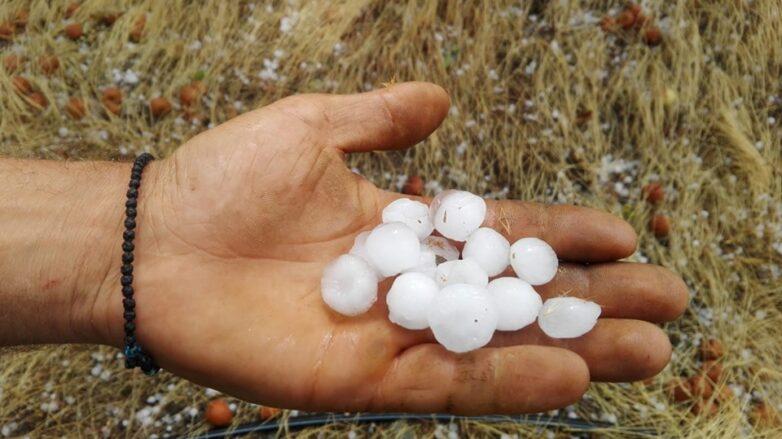 Μεγάλη η ζημιά στη μηλοπαραγωγή του Δήμου Ζαγοράς-Μουρεσίου
