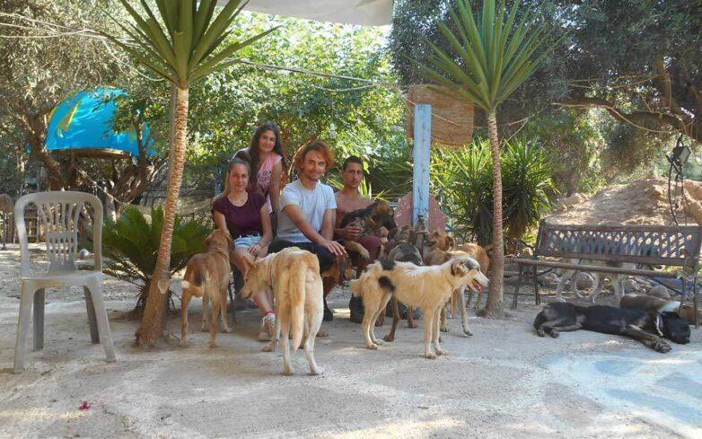 Δωρεάν διακοπές με αντάλλαγμα τη φροντίδα αδέσποτων