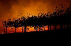 Καίγονται οι φημισμένοι αμπελώνες της Καλιφόρνια