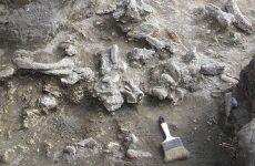 Στην Ινδονησία τα τελευταία στον κόσμο απολιθώματα του Homo Erectus (βίντεο – φωτογραφίες)