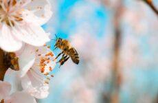 Ευρωβουλή: Σώστε τις μέλισσες!