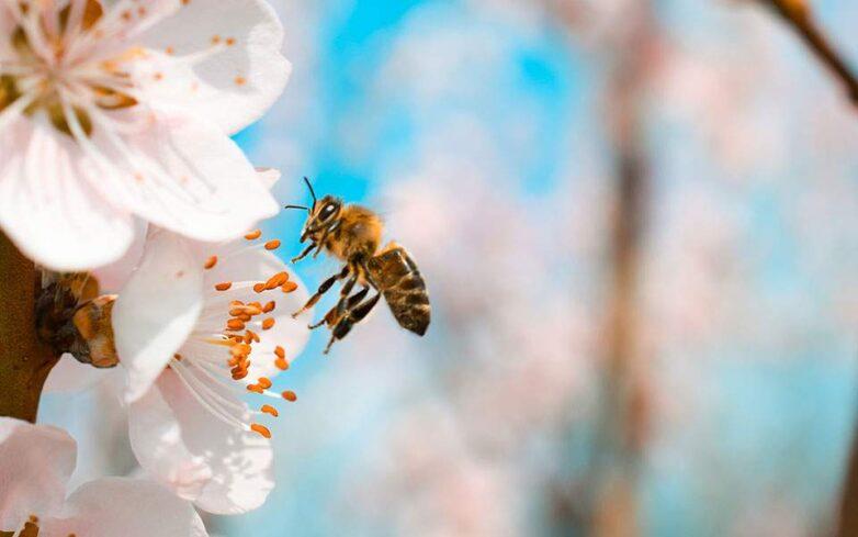 Προστασία μελισσών από χημικούς ψεκασμούς