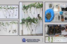 Καλλιεργούσαν δενδρύλλια κάνναβης στη Λάρισα