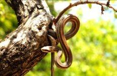 Φίδι από πυλωτή στις Αλυκές απομάκρυναν πυροσβέστες