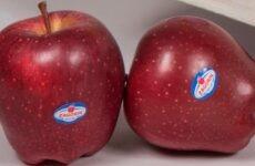 Μήλα ZAGORIN: Ανανεώνουν το ραντεβού με τους καταναλωτές για τον επόμενο Σεπτέμβριο