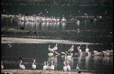 Τους 76 υγρότοπους της Θεσσαλίας αναδεικνύει η Περιφέρεια