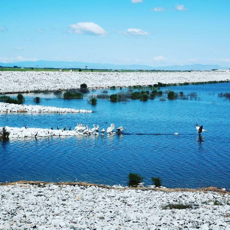 Περίθαλψη τραυματισμένων ειδών ορνιθοπανίδας στην περιοχή ταμιευτήρων πρώην λίμνης Κάρλας