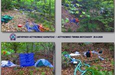 Χασισοφυτεία σε δασώδη περιοχή του Δήμου Μουζακίου Καρδίτσας