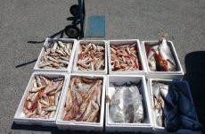 Πρόστιμα σε Σκιάθο και Αλόννησο για αλιεύματα