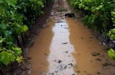 Καταστράφηκαν καλλιέργειες και πλημμύρισαν δρόμοι στη Νέα Αγχίαλο
