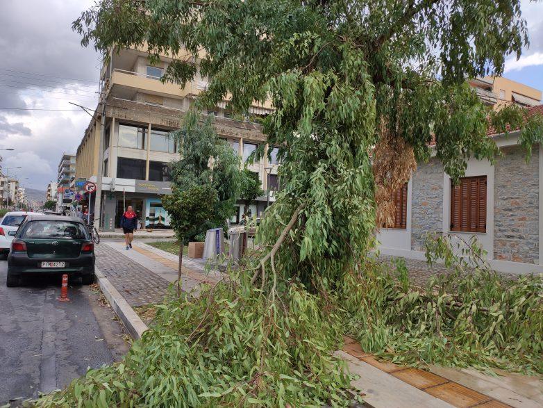 Πτώση δέντρων στο Βόλο λόγω κακοκαιρίας