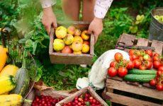 Παγκόσμια ημέρα διατροφής 2020: Καλλιέργεια, θρέψη, βιωσιμότητα