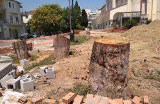 Π.Π.Μ.: Κάτι λίγα δέντρα μένουν ακόμα στο Βόλο για… κόψιμο