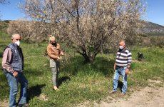 Καλλιέργειες στο Περίβλεπτο υπέστησαν σημαντικές ζημιές λόγω του ακραίου ψύχους