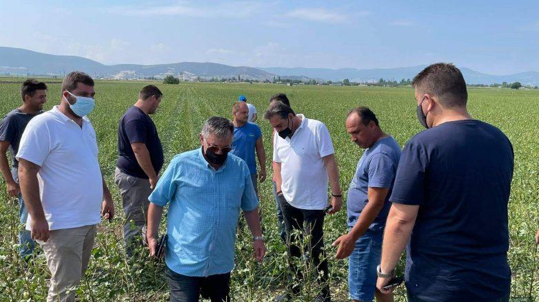 Στο πλευρό των χαλαζόπληκτων παραγωγών η Περιφέρεια Θεσσαλίας