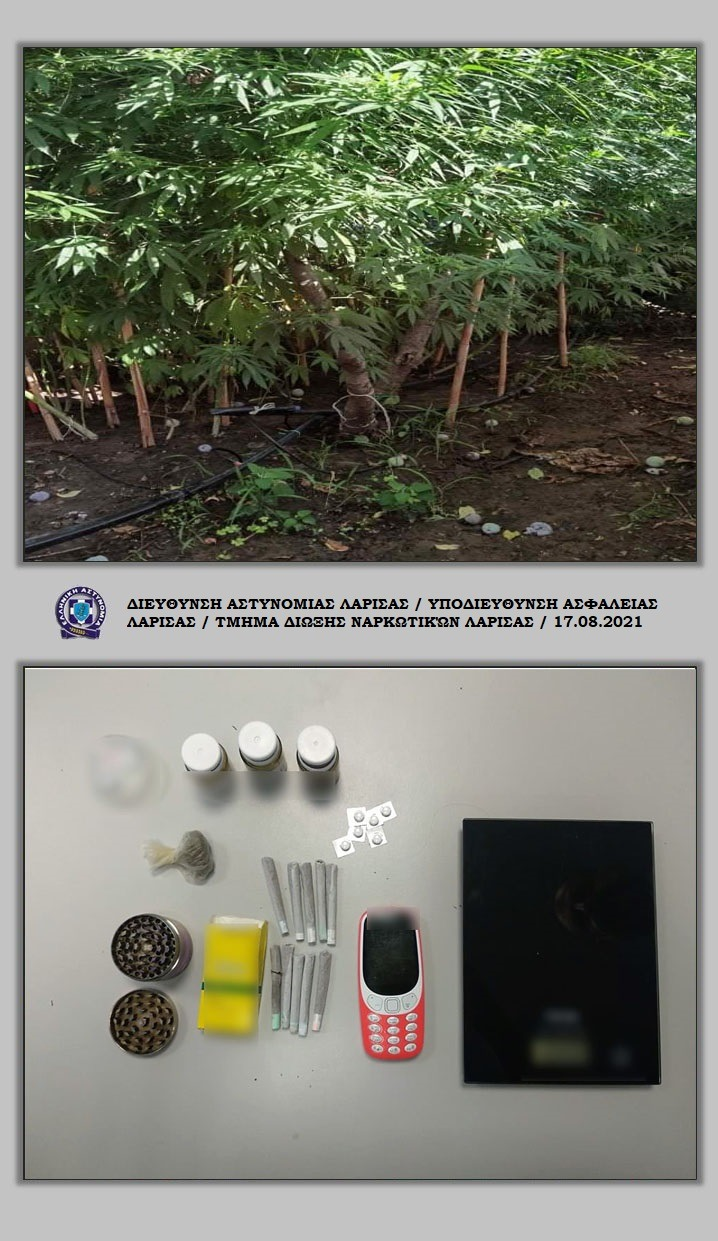 Φυτεία δενδρυλλίων κάνναβης σε αύλειο χώρο οικίας στον Δήμο Κιλελέρ