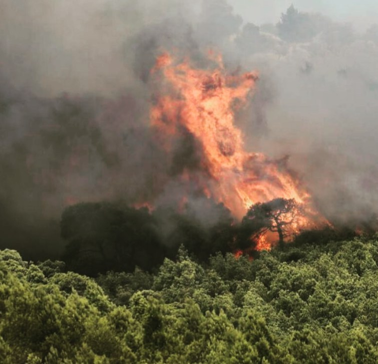 Φωτιές σε Αττική και Εύβοια: Εικόνες απόλυτης καταστροφής