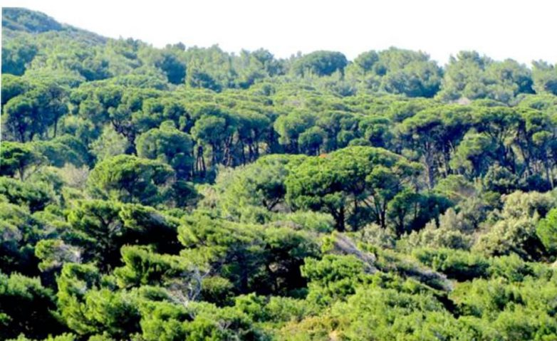 Παρατείνεται η απαγόρευση κυκλοφορίας σε δασικές περιοχές