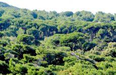 Απαγόρευση μετακίνησης σε δάση και εθνικούς δρυμούς