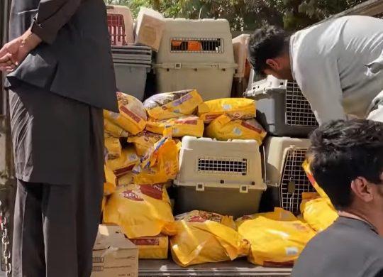 Η Καμπούλ παραδίδεται στο χάος