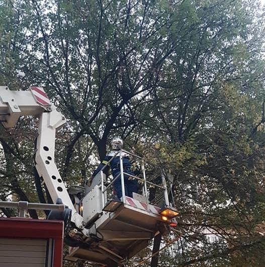 Γατάκι ελευθέρωσαν οι πυροσβέστες