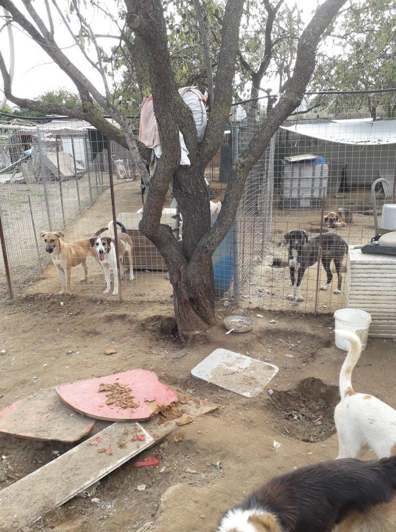Εθελόντριες και εθελοντές του Ε.Σ.Ε.Δ. καθάρισαν χώρο αδέσποτων